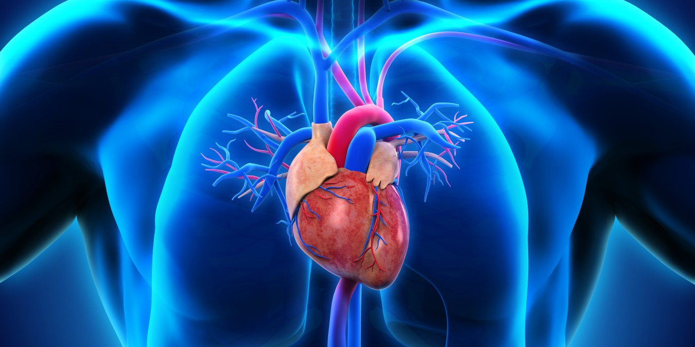 Tips about how to Accept Cardiovascular Disease