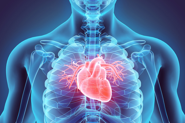 An introduction to Heart Diseases